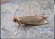 Moth Control | Textile Moth Control London | Moth Infestation London